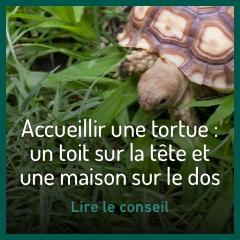 accueillir-une-tortue