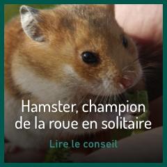 hamster-champion-de-la-roue-en-solitaire