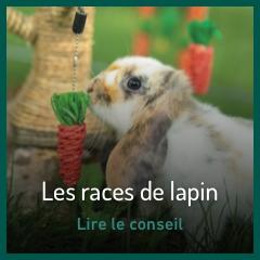 les-races-de-lapin