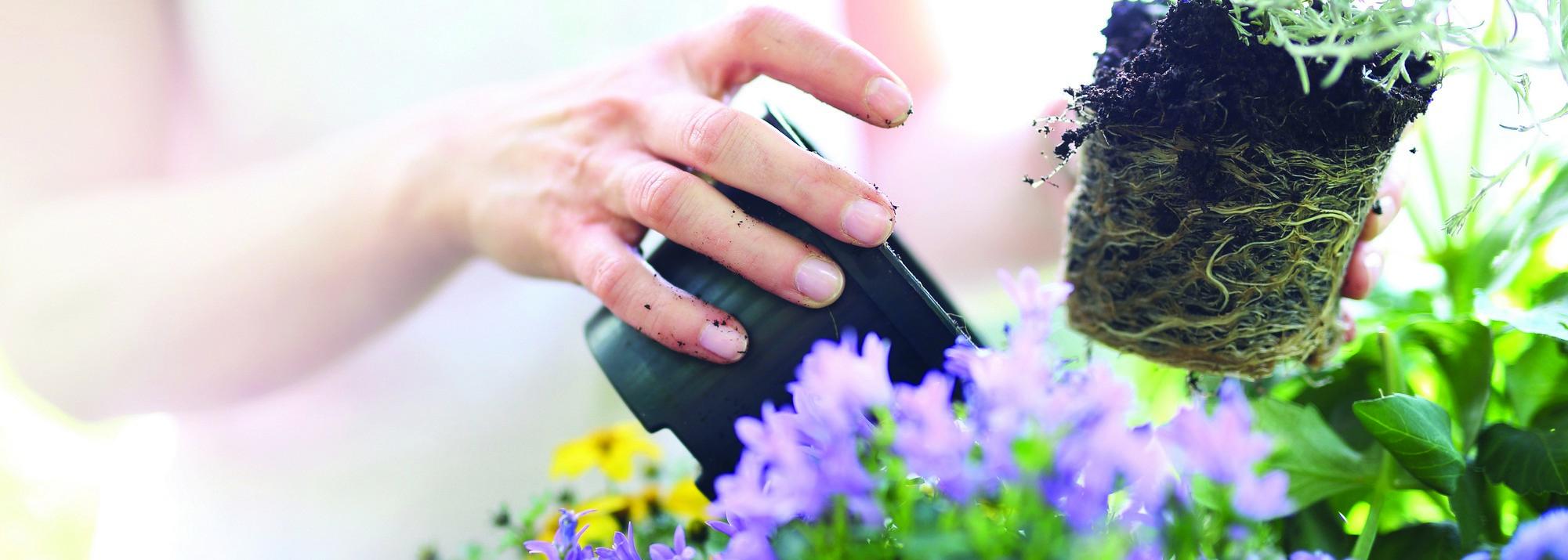 Adopter une déco fleurie