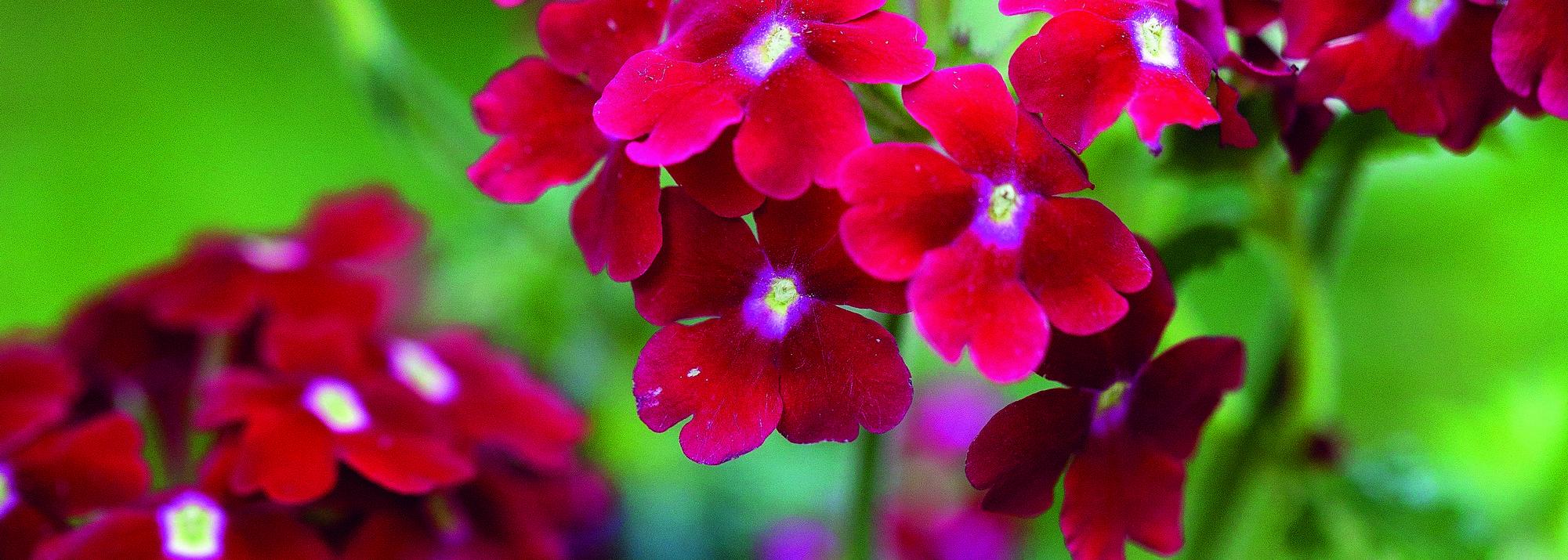 Prospectus plantes fleuries