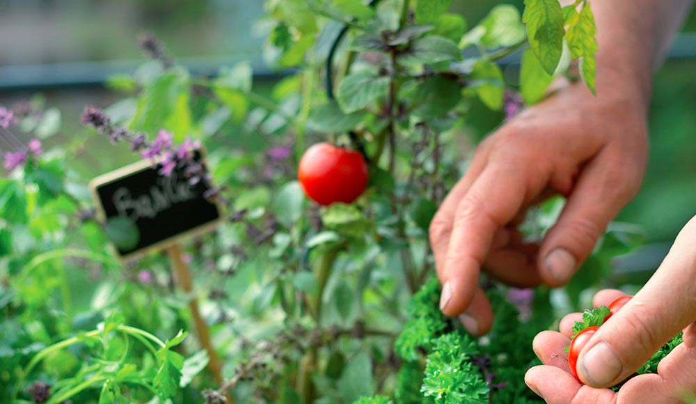 Récoltez vos légumes