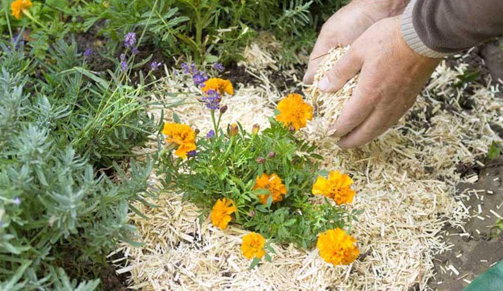 Slider_agenda-du-jardinier_1