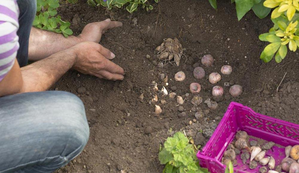 Slider_agenda-du-jardinier_6