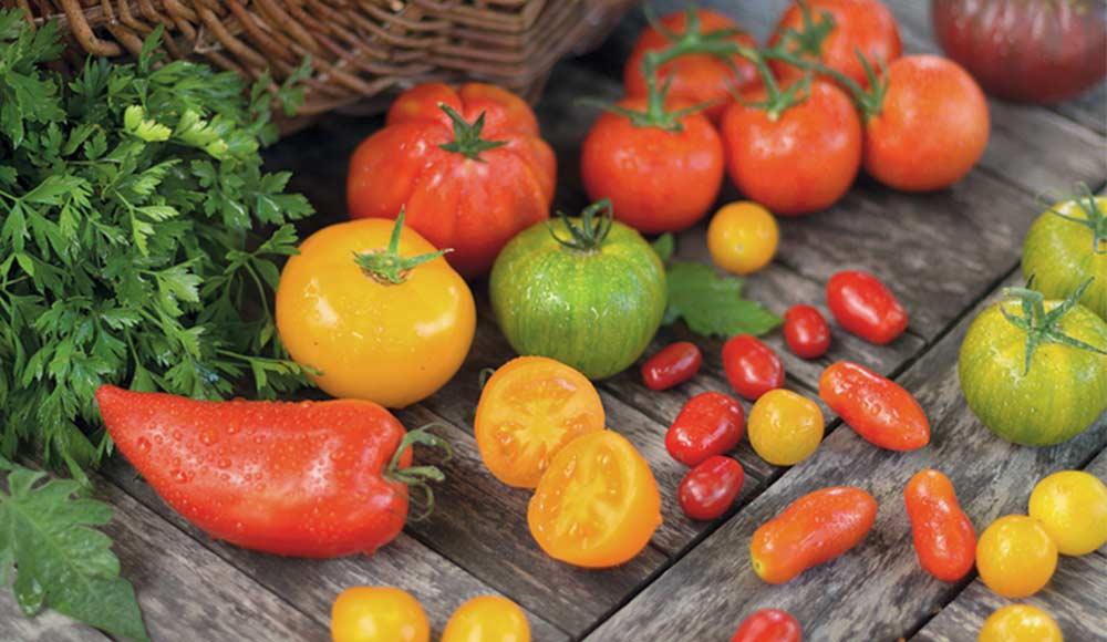 Quelles variétés de tomates choisir ?