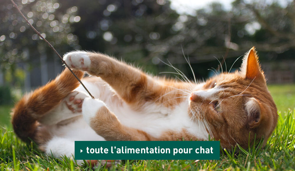 Comment bien nourrir son chat