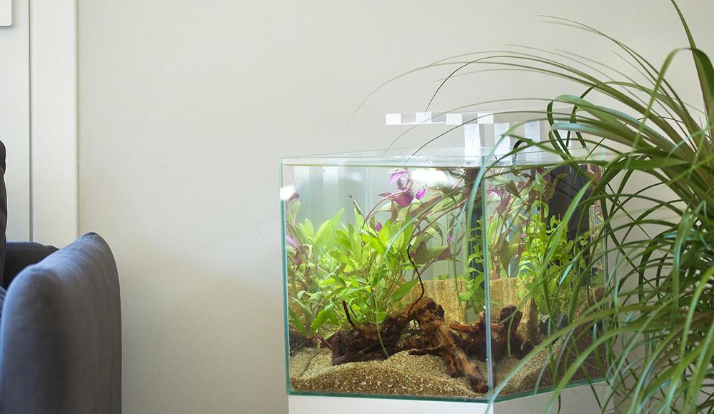 Collection d'aquarium déco