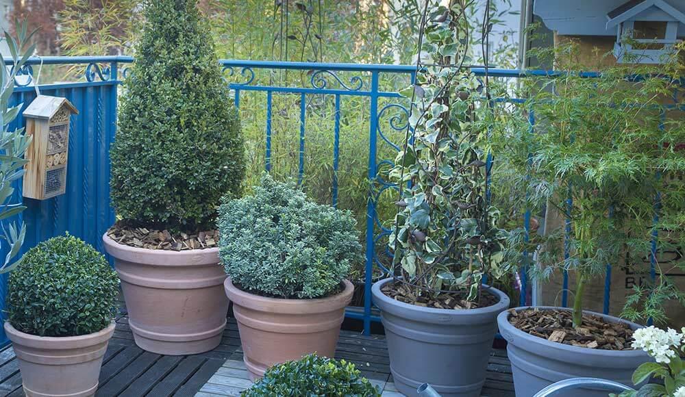 balcon terrasse sur botanic. Black Bedroom Furniture Sets. Home Design Ideas