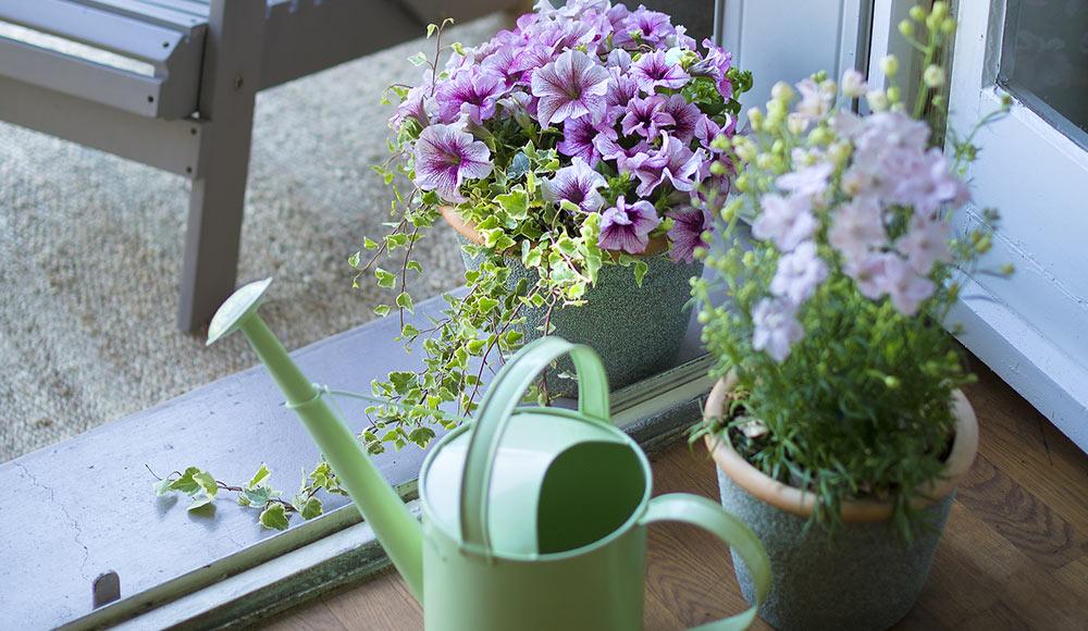 Arroser facilement les plantes de balcon