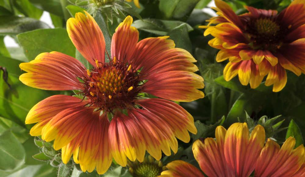 botanic-soutient-les-associations-jardin-art-et-soin_0_2