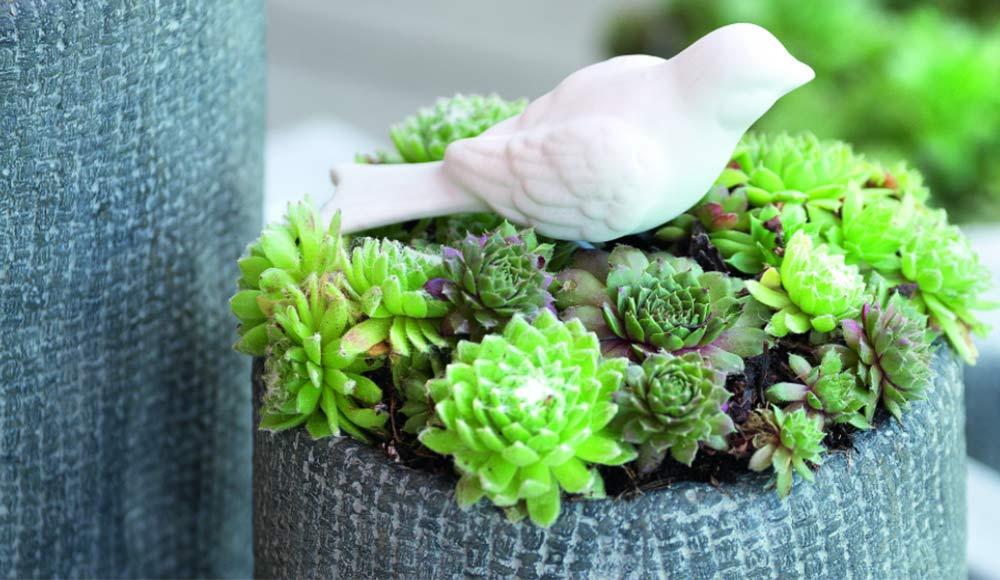 Ma composition de succulentes