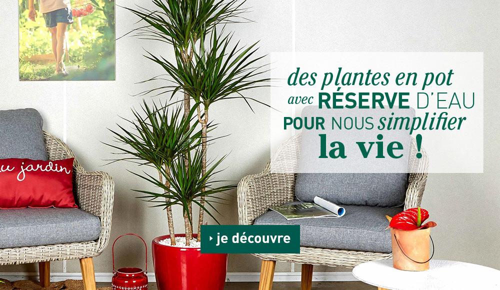 Slider_collection-plantes-pots-lechuza