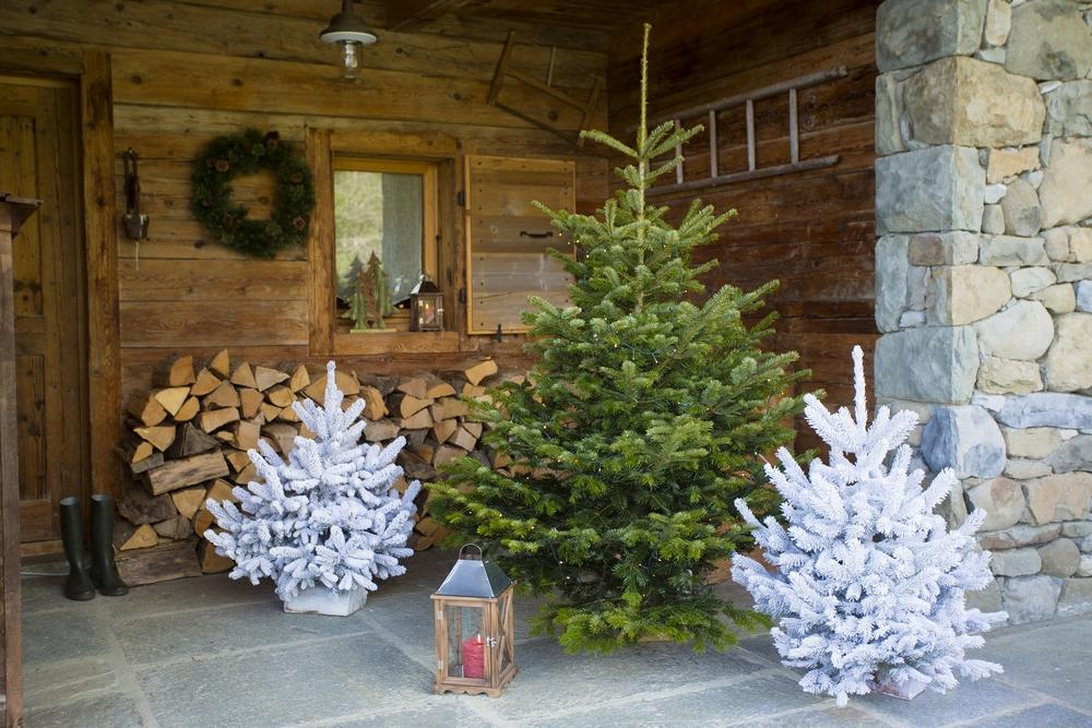 Des sapins frais pour Noël