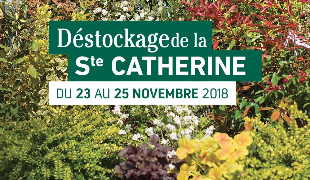 D stockage botanic for Destockage plantes