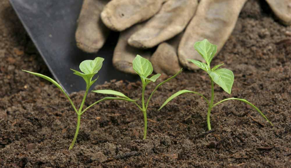 Répandez du fumier pour nourrir votre terre