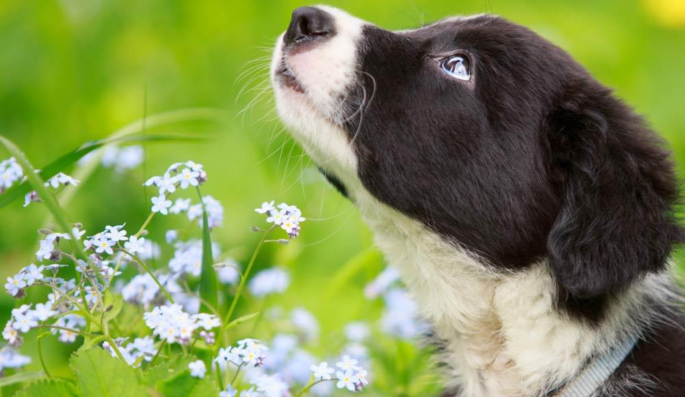 Les shampoings pour chien