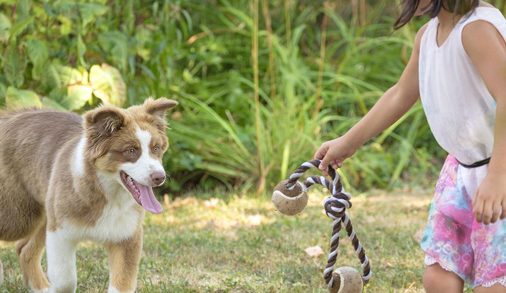 Accueillir un chien