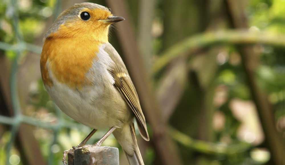 Mangeoire pour oiseaux: mode d'emploi
