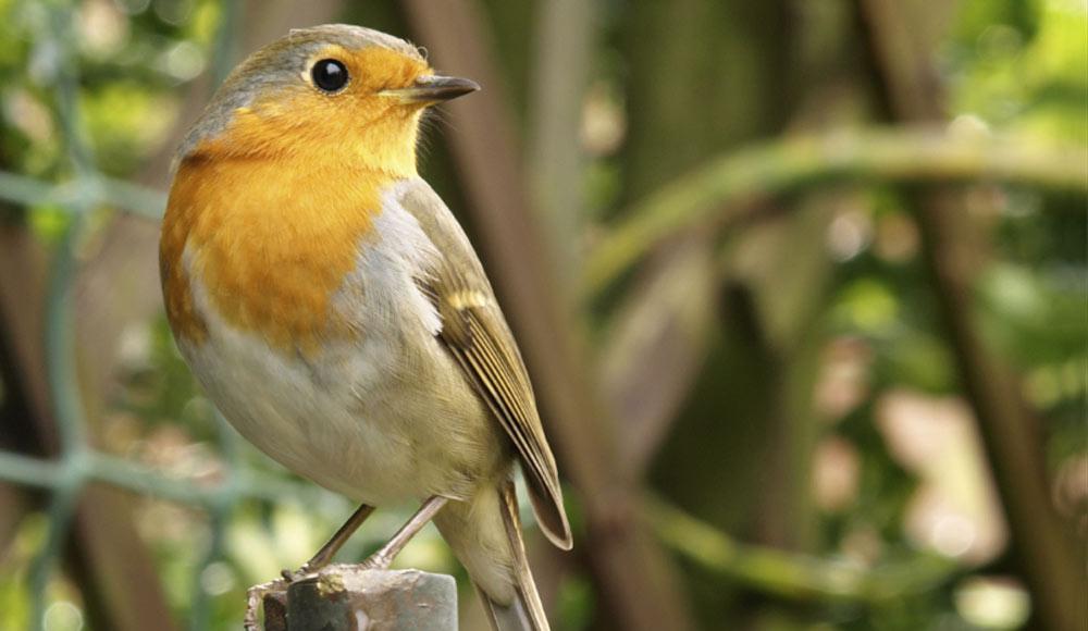 Nourrir les oiseaux du jardin