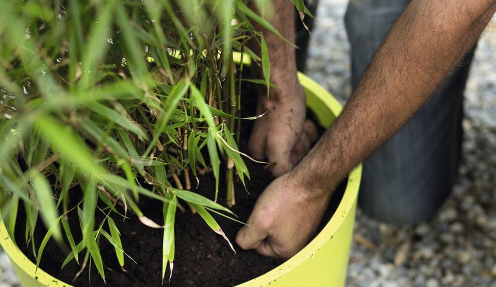 Planter un arbre en bac