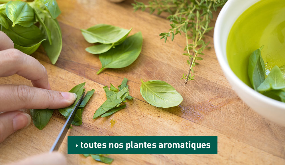 Collections d'aromatiques
