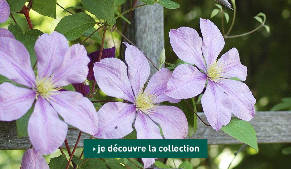 Jardinerie bio en ligne magasin d 39 articles de jardinage for Magasin de jardinage en ligne