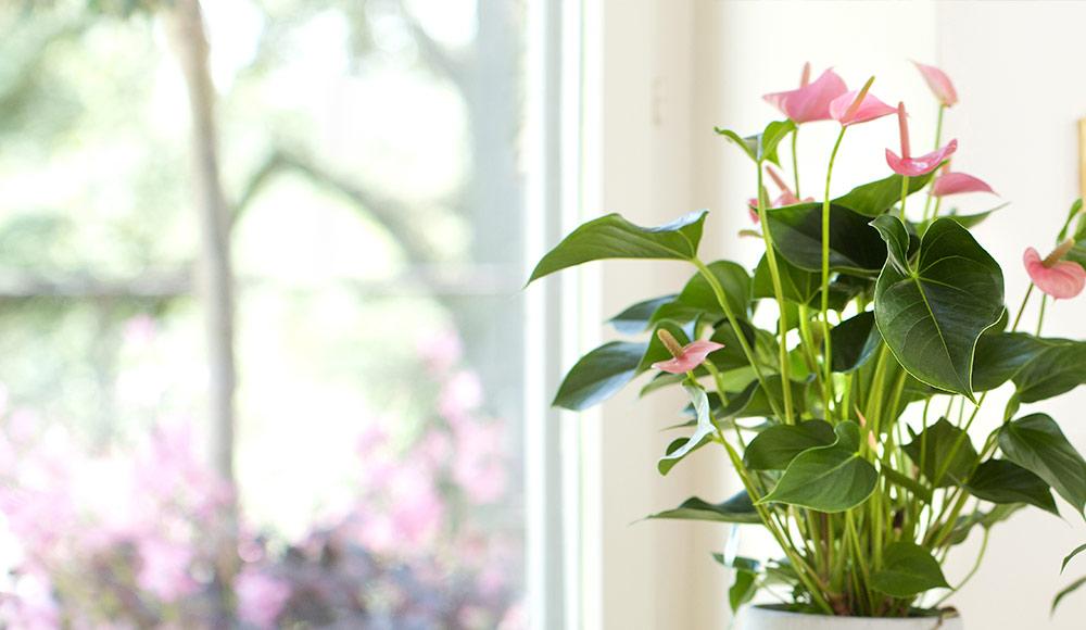 Des plantes d'intérieur