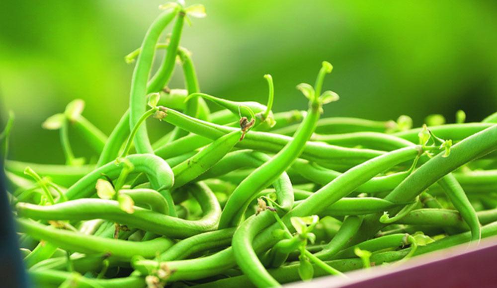 Plantez vos haricots