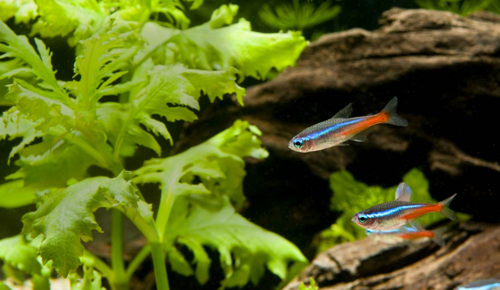 magasin pour animaux poissons animalerie en ligne botanic 174 botanic