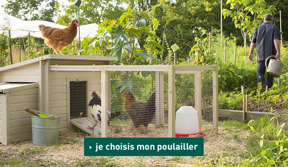Accueillir des poules