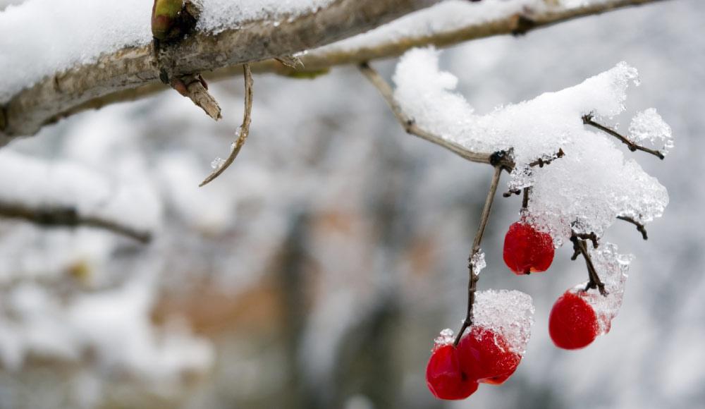 Préparez vos plantes à l'hiver
