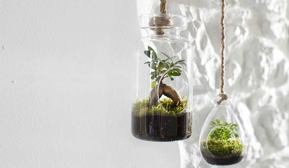 Je fabrique mon propre terrarium !