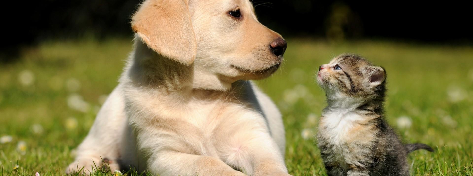 Prendre soin de son animal au naturel